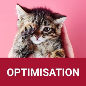 Comment optimiser image web